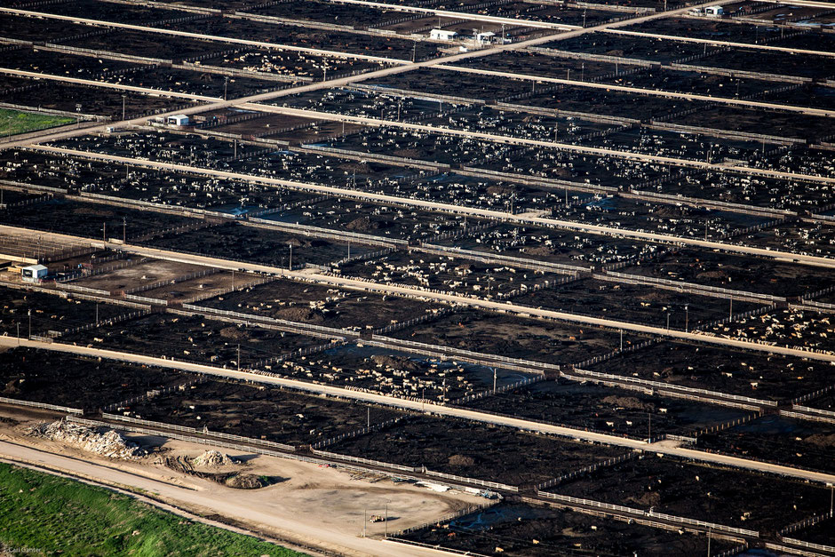 Concentrated Animal Feeding Operation (CAFO) - at least at this particular CAFO they have access to sunlight!