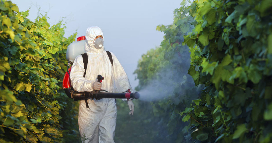 A man spraying pesticides on plants