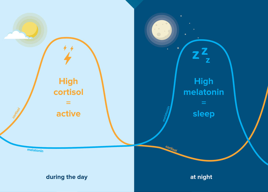 The Cortisol and Melatonin Dance