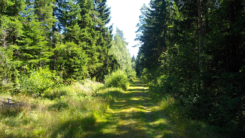 Auf dem Jean-Paul-Weg – hinter Nagel