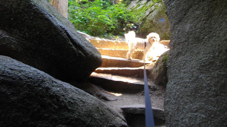 Fidel kommt durch das Felsenlabyrinth