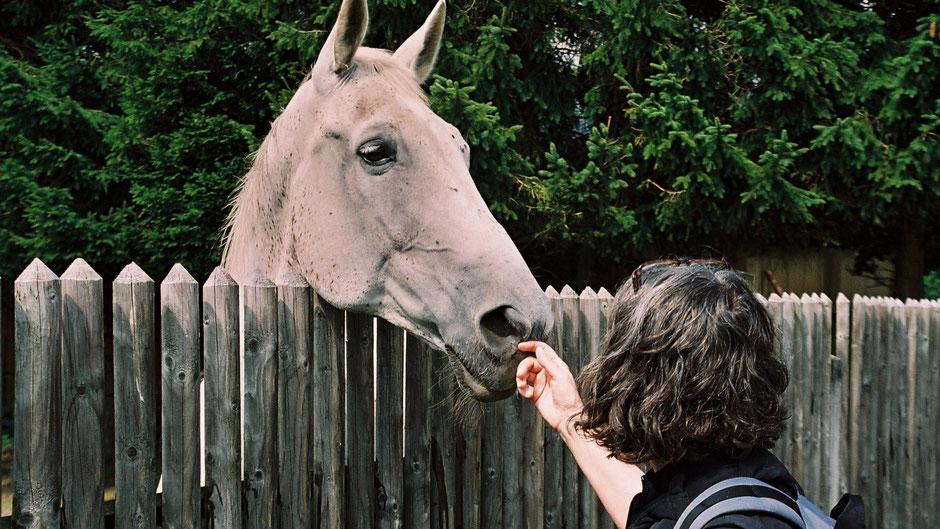 Vorbei an der Pferdekoppel hinter dem Völkenreuther Wirtshaus