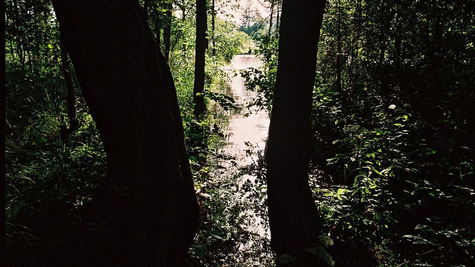 Ein bisschen Moorlandschaft mit kleinen, verschlungenen Wasserläufen bei Nagel