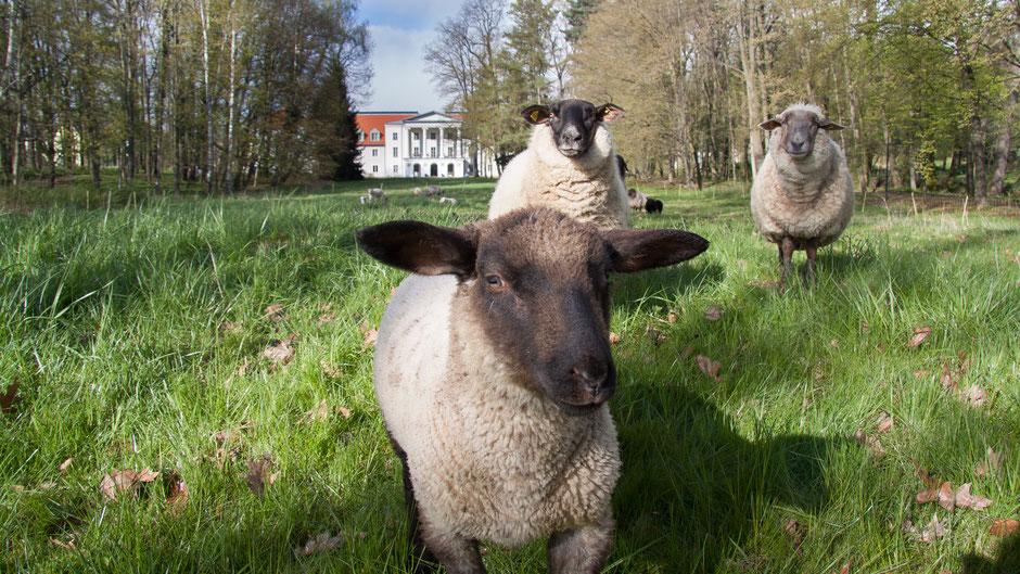 Schloss Löbichau heute