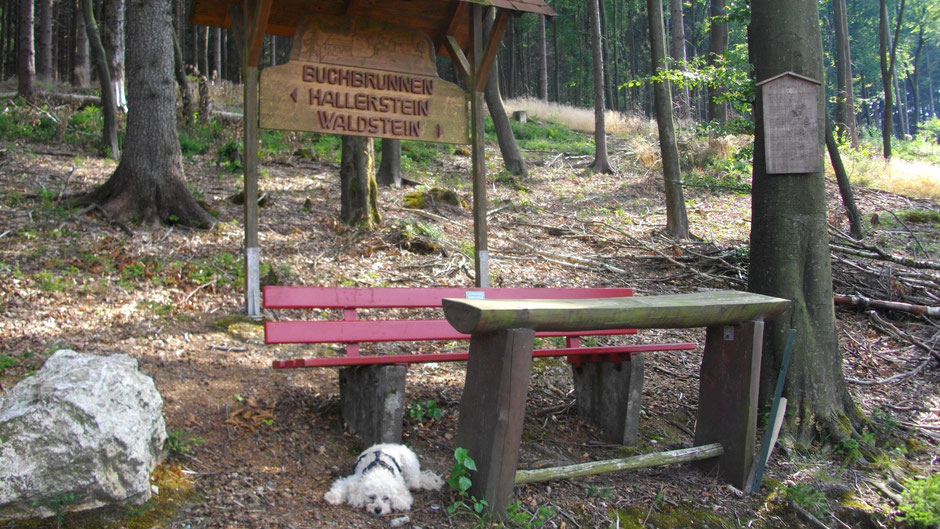 Auf dem Jean-Paul-Weg zwischen Hallerstein und Waldstein – am Buchbrunnen