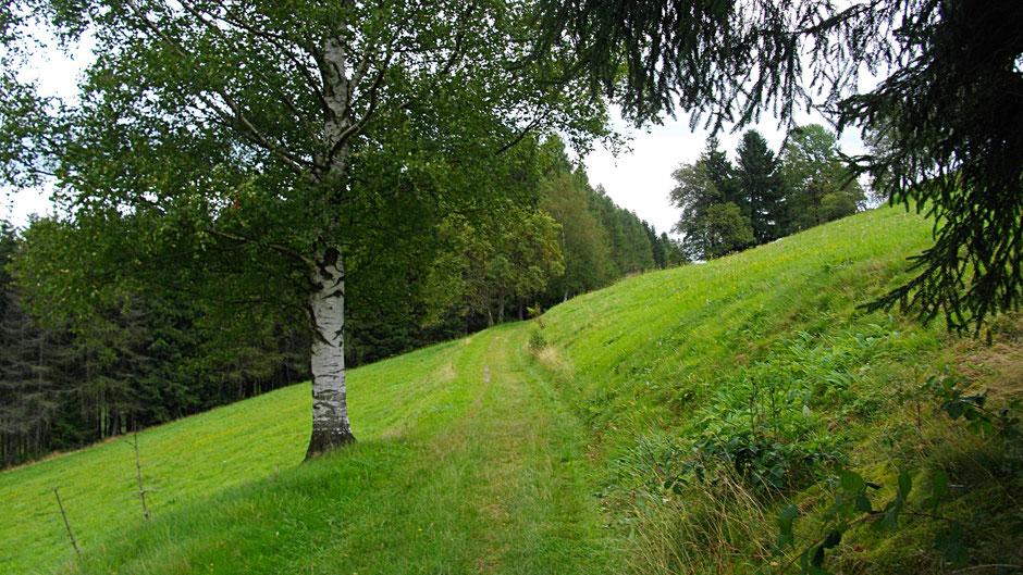 So schöne Wege auf dem Jean-Paul-Weg