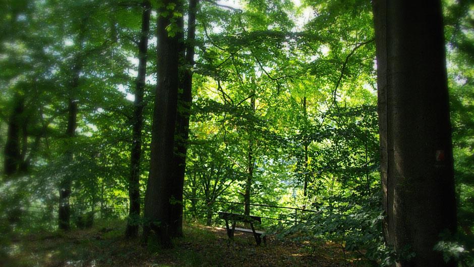 Ruhebank unter Bäumen