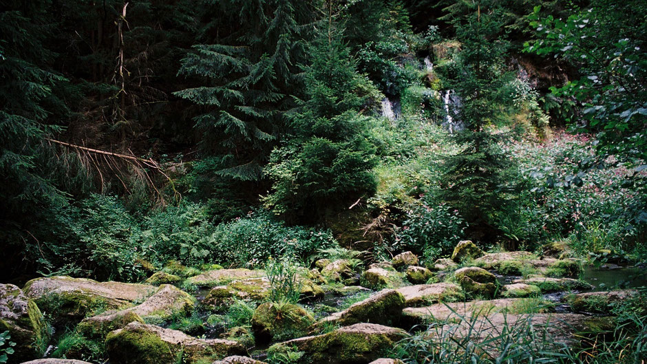 Auf dem Jean-Paul-Weg – der Thusfall im Thuswald