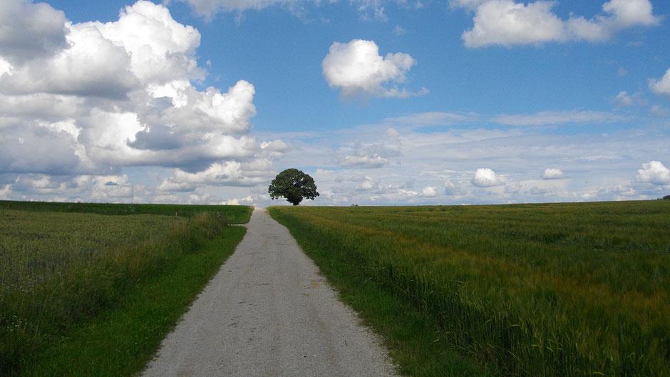 Weg mit Baum