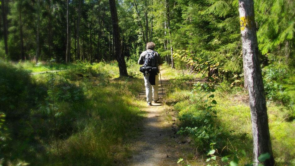 Auf dem Weg von Bad Alexandersbad zur Luisenburg
