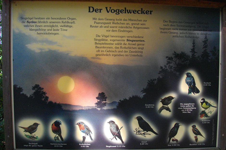 Der Vogelwecker – Naturlehrtafel bei Wunsiedel