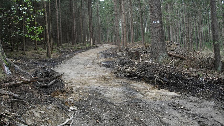 Von Rodungsarbeiten zerstörter Forst