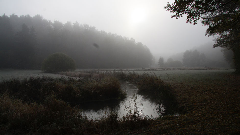 Kainachtal bei Hollfeld im November