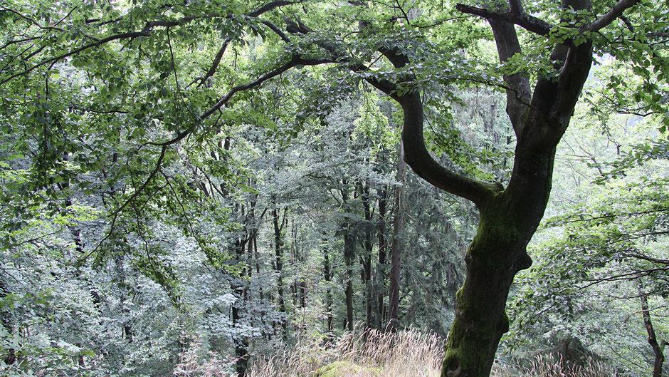 Ein Baum am Wegesrand
