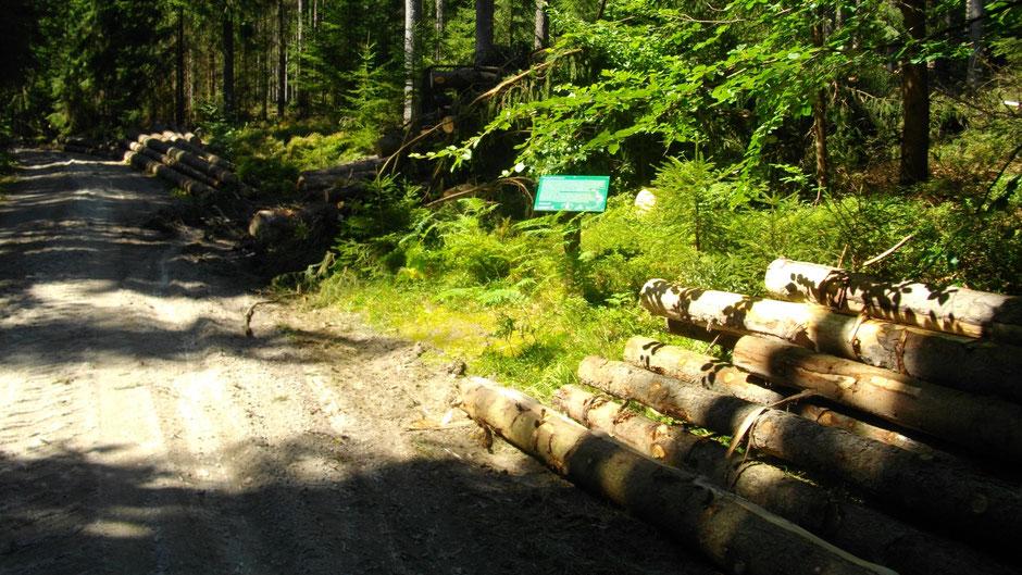Auf dem Jean-Paul-Weg hinter Nagel – Stationstafel 67 »Verregnete Natur-Schulstunde«