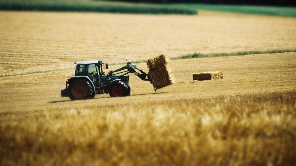 Im Fichtelgebirge –Getreideernte mitten im August