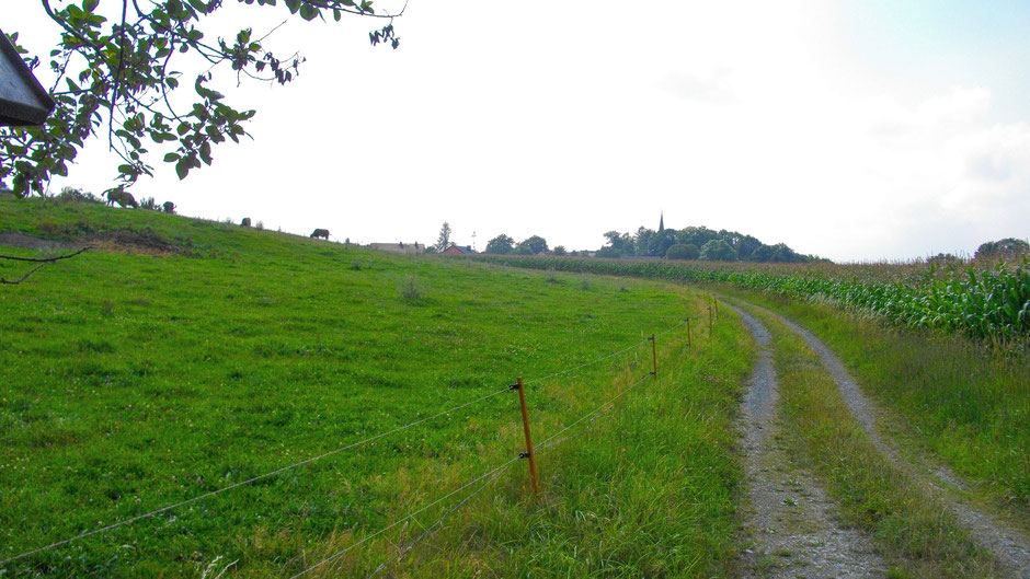 Auf dem Jean-Paul-Weg – Kuhweide vor Hallerstein