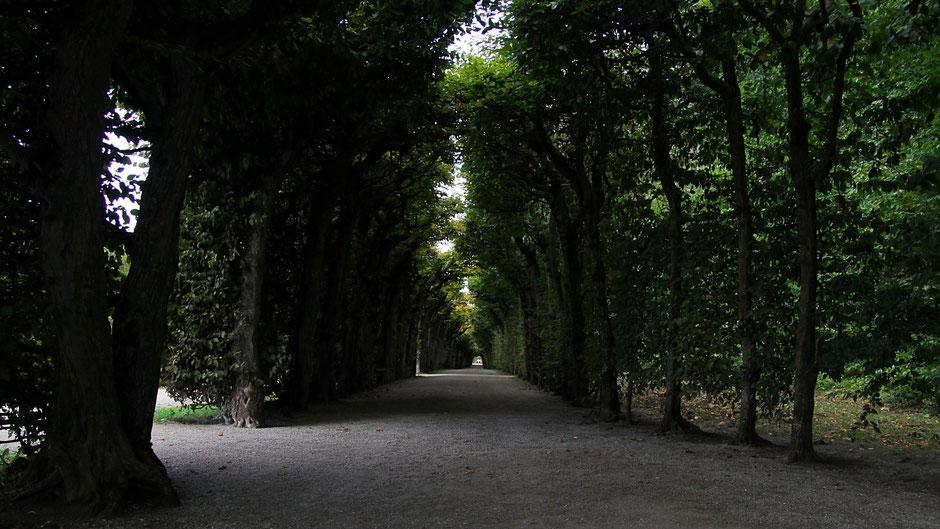 Laubengang Eremitage Bayreuth