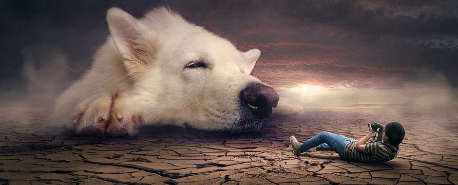 Hundeschuhe, Hundespielzeug, Hunde