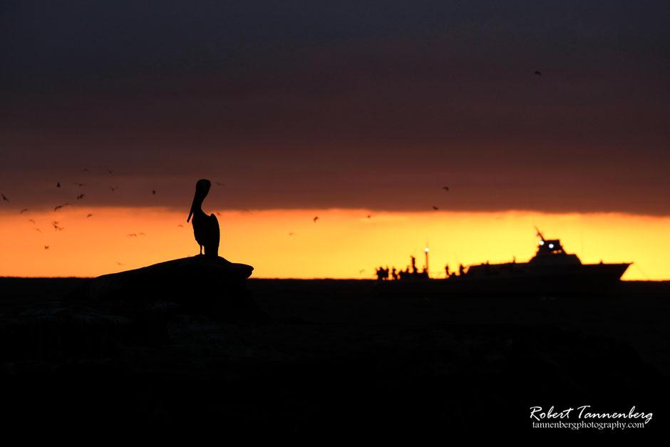 Pelikan und Boot im Sonnenuntergang