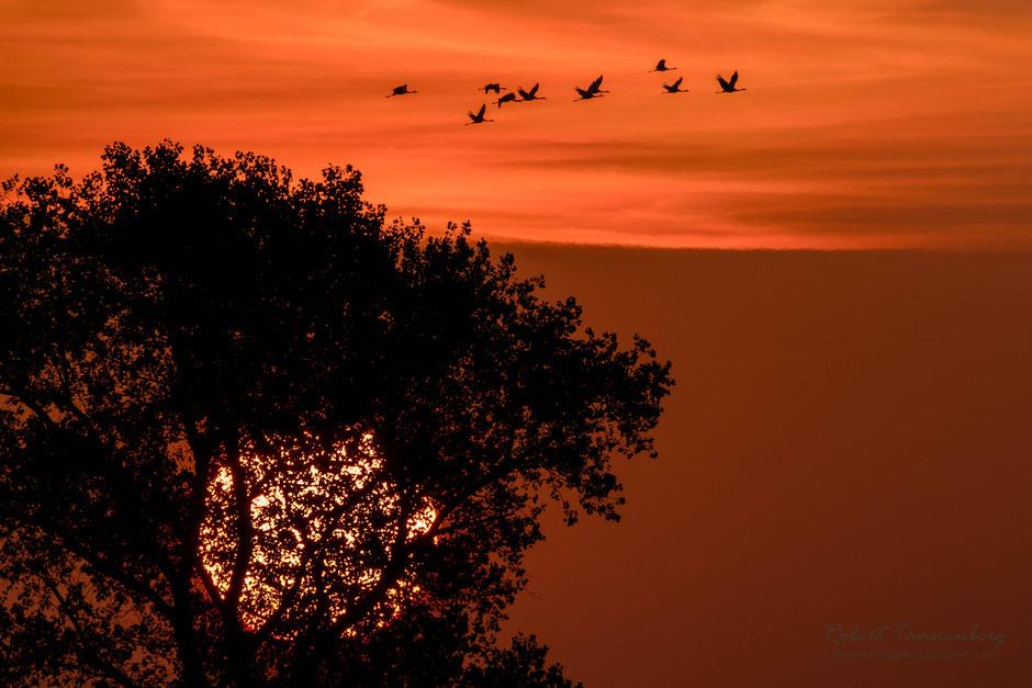 Sonnenaufgang Linum Brandenburg Vogelzug Kraniche