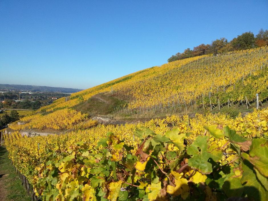 Weinhang in Radebeul