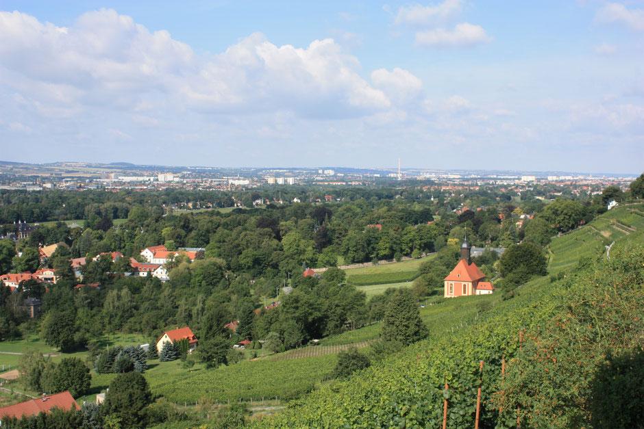 Pillnitzer Weinberg mit Blick nach Dresden