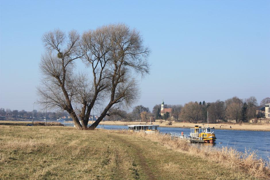 """Pillnitz Fähranlegestelle mit Kirche """"Maria am Wasser"""""""