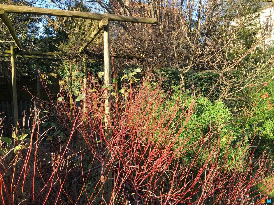 Mon jardin par une belle journée hiver : plusieurs composantes d'un beau jardin pour l'hiver réunies 😀