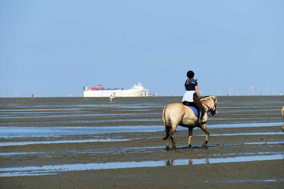 Duhner Wattrennen, das Pferderennen auf dem Meeresgrund