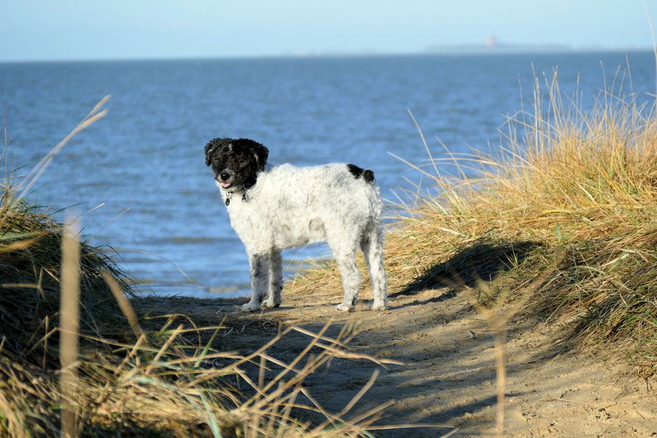 Ferienhäuser & Ferienwohnungen in Cuxhaven für Gäste mit Hund
