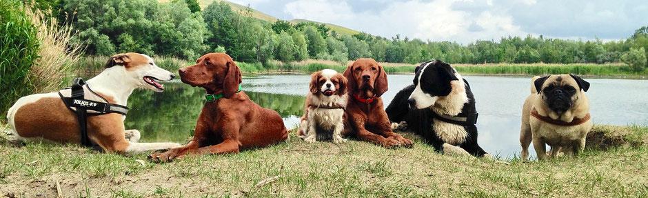© Tiernanny24....Hundespass beim Gassi gehen, in der Hundebetreuung, rund um reinickendorf, pankow und glienicke