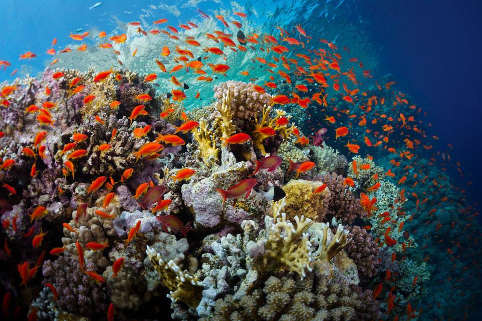 Meerwasser Shop - Meerwasseraquarium