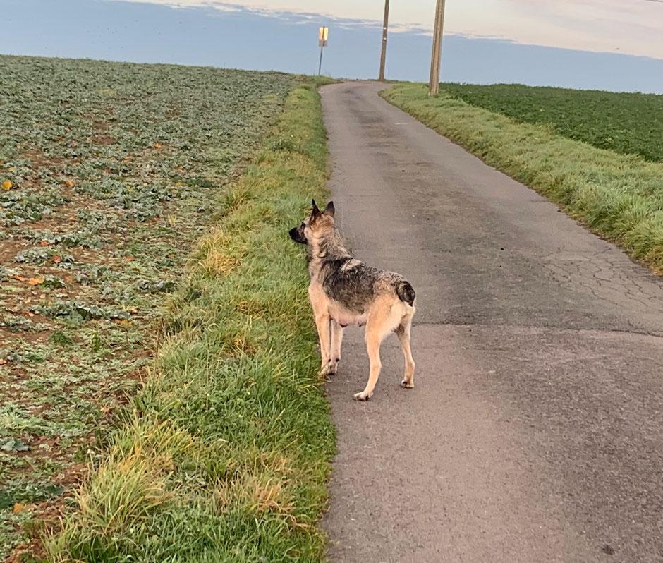 Syrah promenade matinale pour favoriser la montée du lait