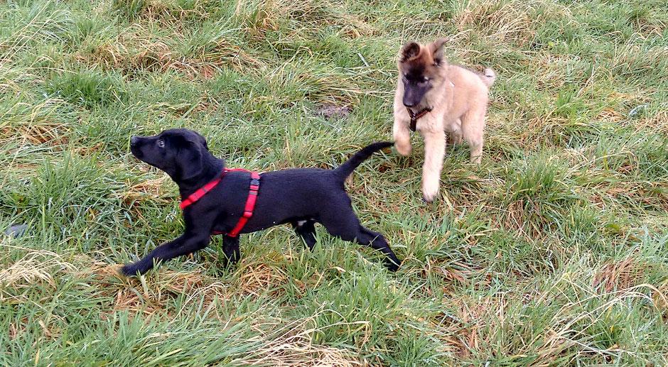Finch und Ruby