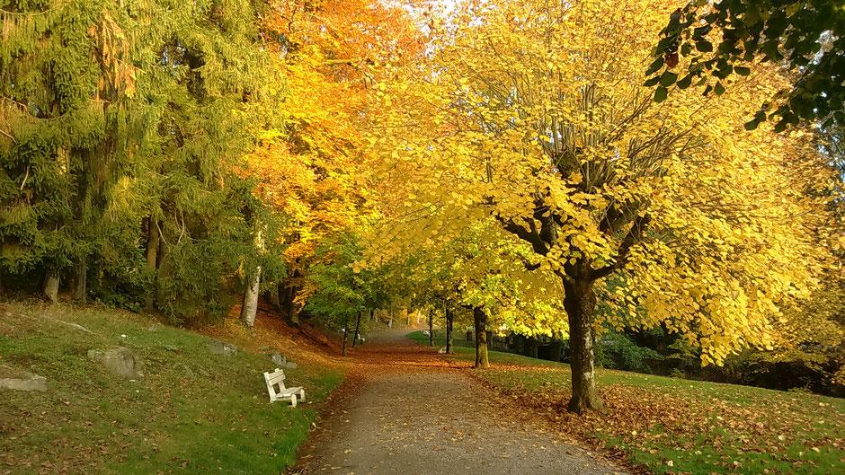 La grande allée d'entrée du Grand Parc thermal en automne (c) Municipalité de LVLB