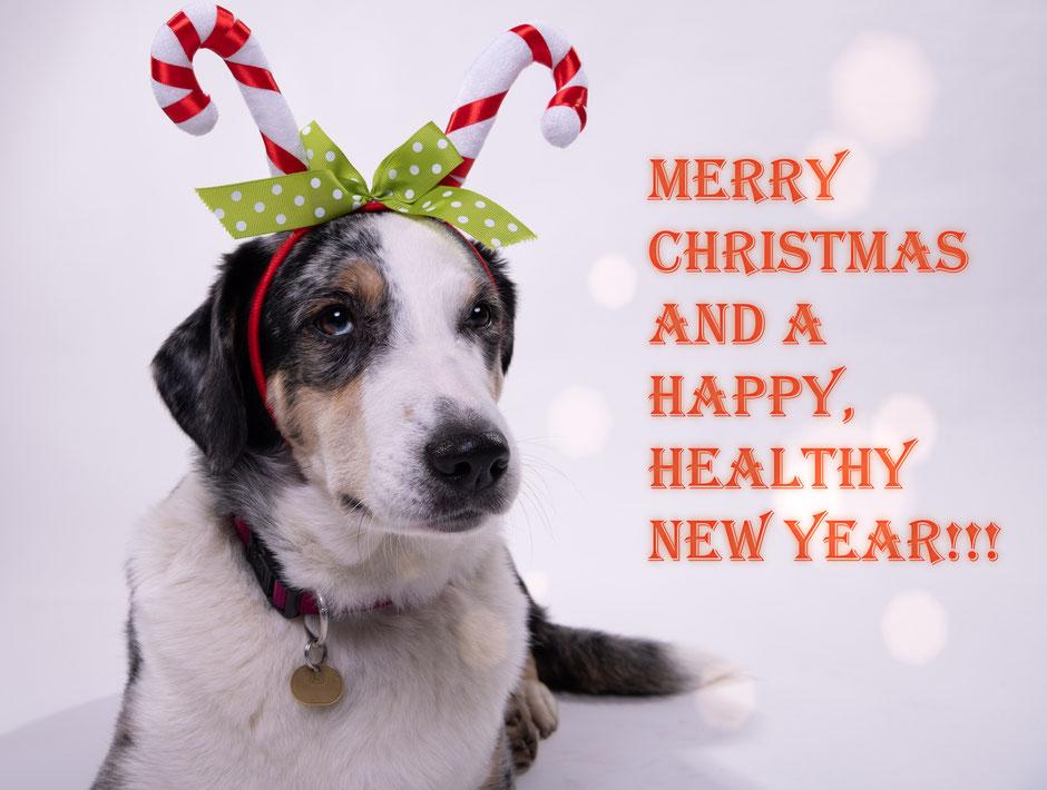 Hund mit Rentiergeweih - Weihnachtskarte, frohe Weihnachten und gutes neues Jahr