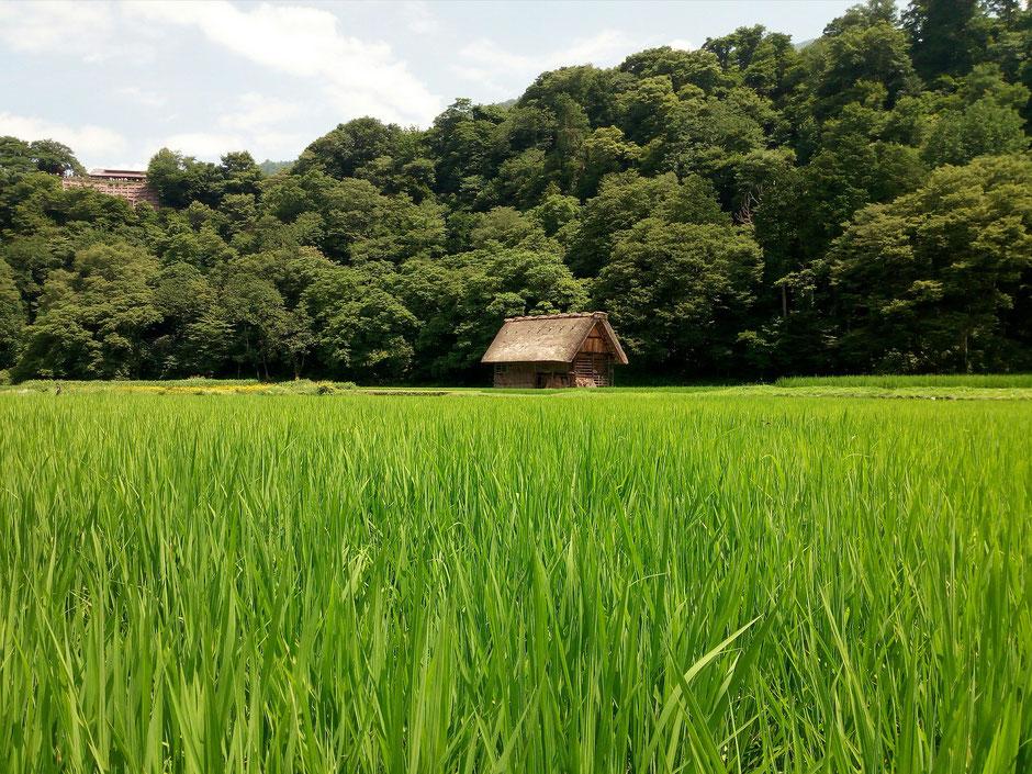 川崎市内ではここまでの空き家や農地はないかもしれませんが