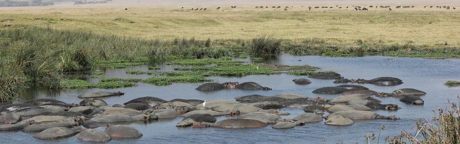 """Ngorongoro """"Beach Life"""""""
