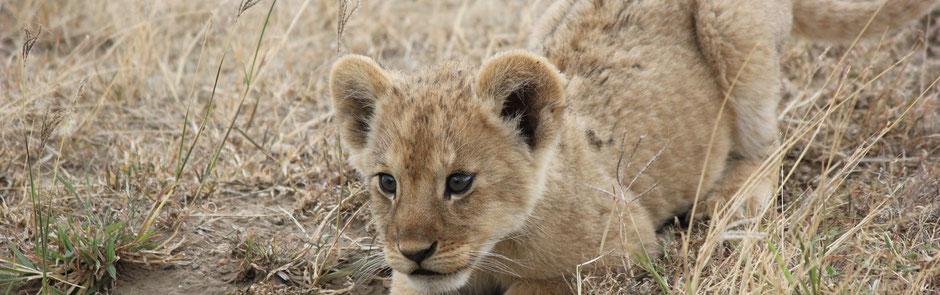Uganda Safarierlebnis