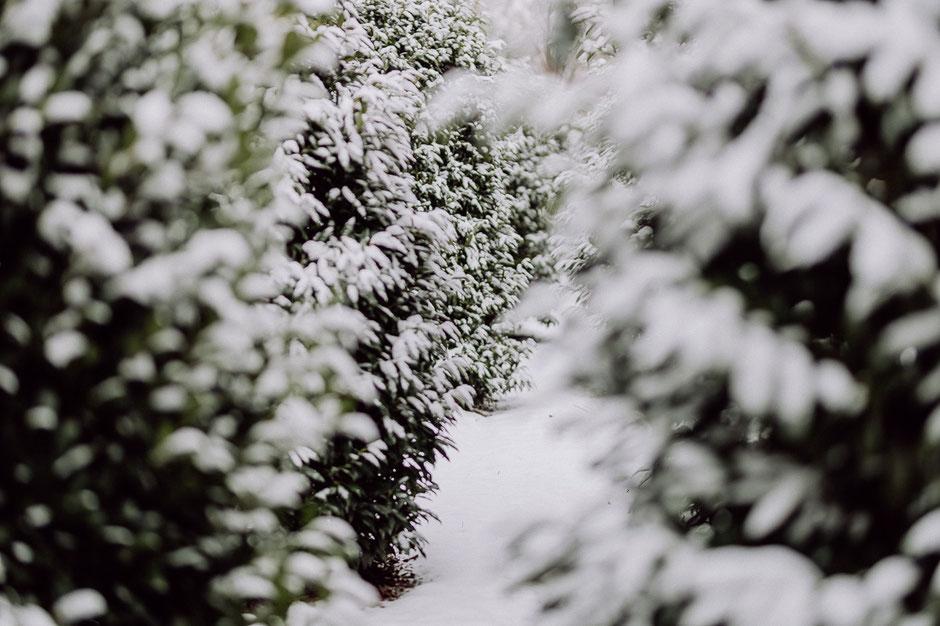 Blick auf schneebedeckte Bäume in Mainz