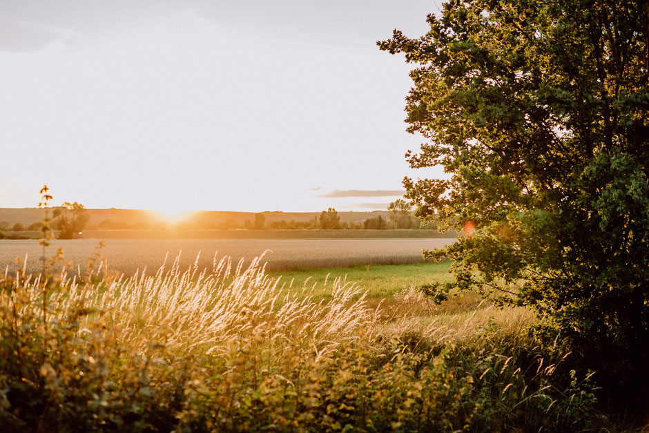 Sonnenuntergang über einem Feld in Bodenheim