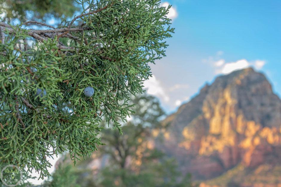 Wenn ein leichtes Lüftchen den Duft der Pinienbäume in der warmen Sonne trägt, dann sind wir am rechten Platz.