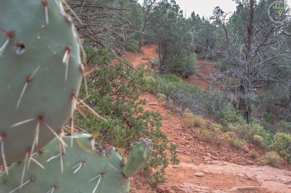 Der Trailhead führt durch waldige Passagen ebenso wie durchkarge Slickrockebenen