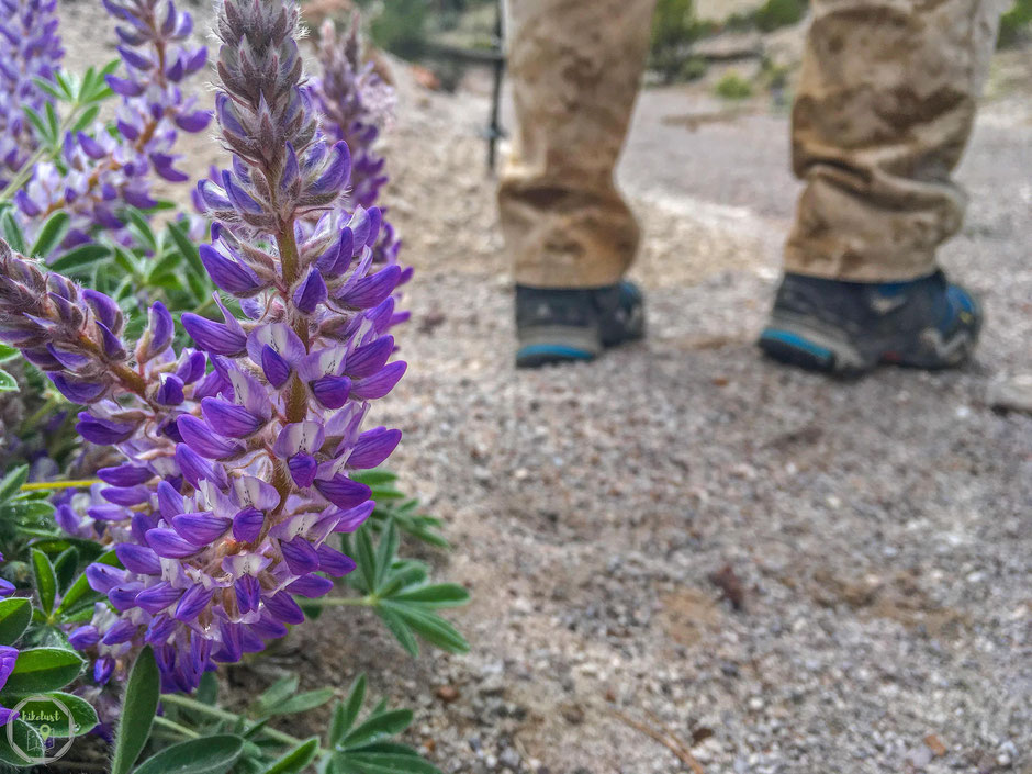 pine park utah nevada abgelegen natur wildnis wandern hikelust