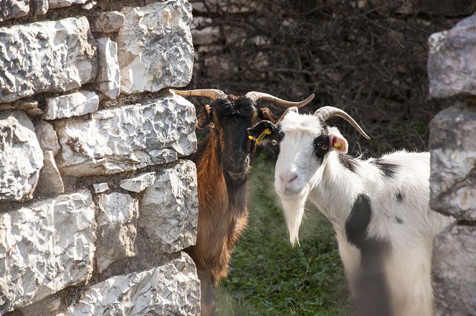 Vegan in Griechenland