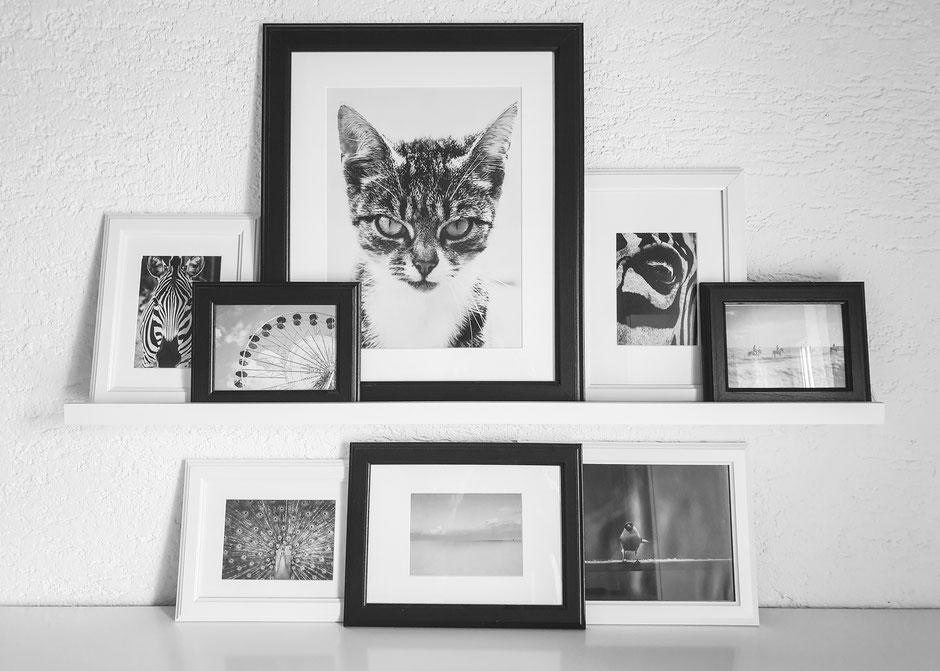 Bilderwand mit Bilderleiste, Bilderleiste, Wanddeko mit Fotos, Fotografie Corinna Mamok