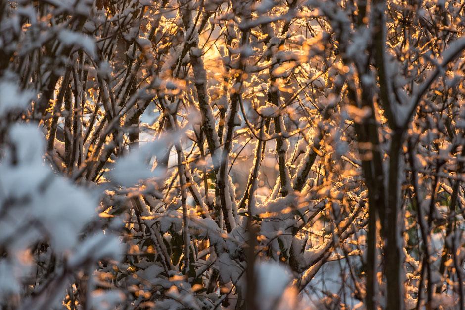 """Die Sonne geht unter. Nur wenige Minuten bleiben, um dieses Bild """"Schnee im Sonnenuntergang"""" aufzunehmen. Aber es hat sich gelohnt, finde ich."""