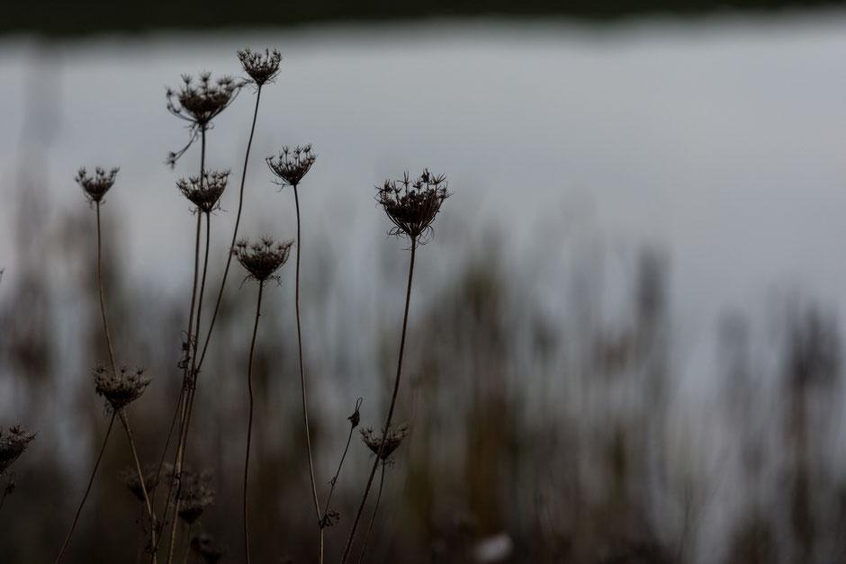 Tagsüber ist alles grau in grau. Und es wird auch noch früh dunkel. Wenn wenigstens Schnee fallen würde. Aber auch jetzt lassen sich schöne Fotomotive finden!