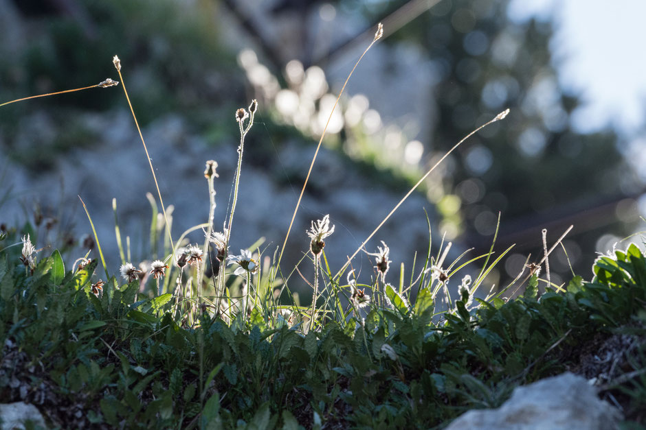 Ein letzter Blick zurück markiert den Abschied aus dieser traumhaften Umgebung. Die Sonne steht schon tief und leuchtet durch die Pflanzen.